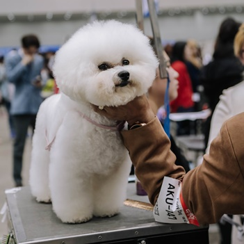The 15th Daegu Pet Show