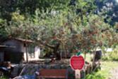 평광사과마을 사진